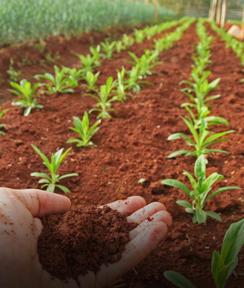 soil substrat