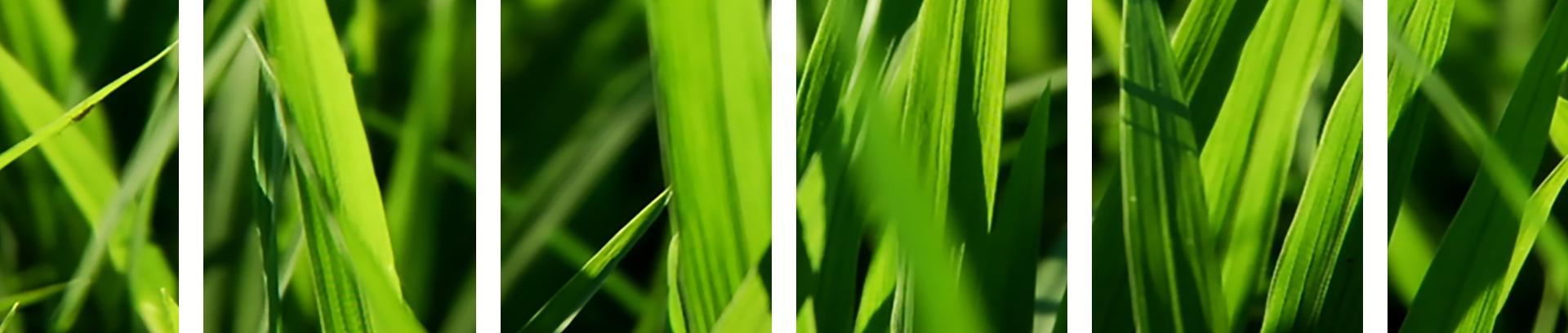 трава2